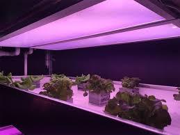 commercial led grow lights side lighting grow room with led grow light c 29540 asnierois info