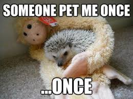 Hedgehog Meme - pin by rebecca gimblett on bucket list completed pinterest