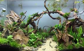 40l premier aquascape aquarium idea pinterest aquariums