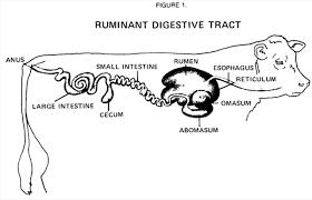 digestive systems snapshot 2012 08 21 20 17 25 human anatomy charts