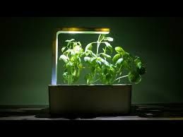 Click And Grow Refills Cilantro Growth Refill For Indoor Herb Garden Click U0026 Grow
