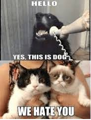 Dog Phone Meme - cheeky pooches on the internet the funniest dog memes 2018 this
