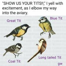Meme Bird - dank meme university