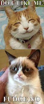 No Meme Grumpy Cat - grumpy cat vs happy cat