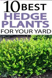 secr aire technique bureau d udes 7 common mistakes when caring for your yard green lawn lawn and