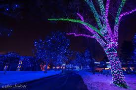 denver zoo lights photos