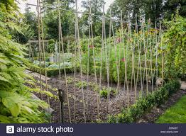flowers for vegetable garden line of bamboo canes in the tunnel garden used to grow fruit stock