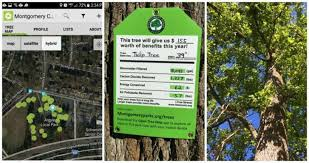montgomery co implements app to help map out trees in parks wtop