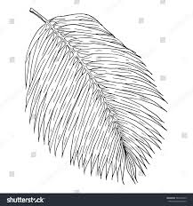 palm leaf hand drawn illustration isolated stock vector 587204273
