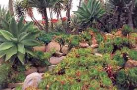 Succulent And Cacti Pictures Gallery Garden Design Garden Design Garden Design With Succulent Garden Design Ideas