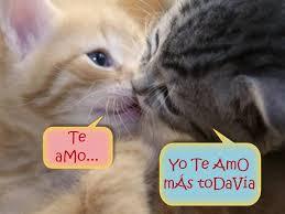 imagenes chistosas y tiernas fabulosas imagenes tiernas de gatitos con frases de amor fotos de
