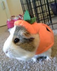 Animal Halloween Costumes 85 Pet Costumes Patterns Ideas Images Pet