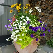 Plants For Patio by Potted Flower Arrangement Ideas Planters Jackson Hole Flower