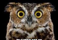 Art Student Owl Meme - coolest art school owl meme art student owl know your meme kayak