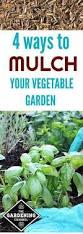 Mulching Vegetable Garden by 4 Ways To Mulch Your Vegetable Garden Garden Mulch Vegetable