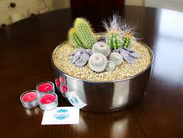 Cactus Planter by Cactus Planter With Large Contemporary Mirror Bowl Indoor Planter