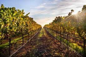 9 of the best wineries in healdsburg california