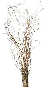 Decor Sticks In A Vase Curly Willow Branches