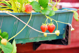 Container Gardening For Food - container gardening for beginners fun ideas for gardening in