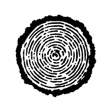 tree rings pictures images Tree rings tree temporary tattoo momentary ink png
