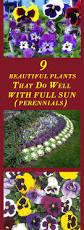 high heat plants best 25 full sun plants ideas on pinterest full sun garden