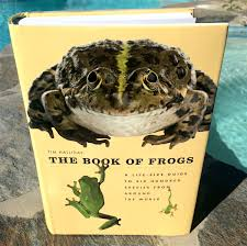 frogs boing boing