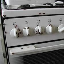 blatte de cuisine idées décoration intérieure