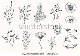 beautiful sketch flowers collection vector download free vector
