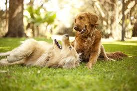 vergleichen zahlt sich aus die muss die hundehaftpflicht alle folgen einer rangelei übernehmen