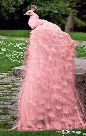 merak albino 42 best para todos los gustos pasteles images on pinterest