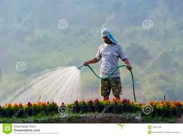 watering plants editorial photo image 30687906