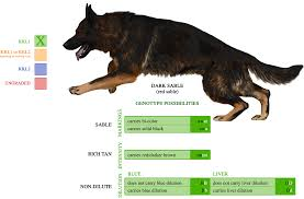 belgian sheepdog national specialty 2014 stiir u0027s journal deviantart