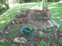 fence to keep chickens out of garden backyard fence ideas
