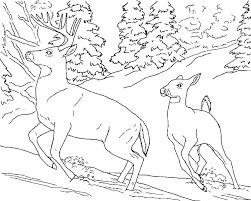 coloring pages wildlife coloring pages realistic animal coloring