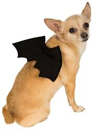 dog halloween costumes images bat wings pet costume