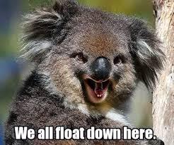 Koala Bear Meme - koala bears cute critters or my les paul forum