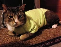 superior post surgical feline u0026 canine appliance or dump the
