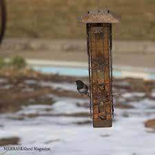 Birds In Your Backyard Feed Birds In Your Backyard This Spring Nebraskaland Magazine