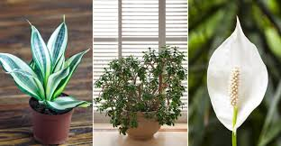 top 5 super easy houseplants my garden life