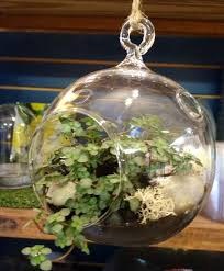 make your own terrariums and fairy gardens the oak leaf