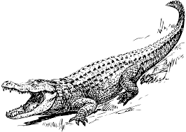 file alligator psf svg wikimedia commons