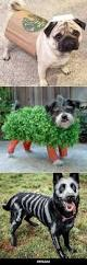 55 best halloween for the office dogs images on pinterest