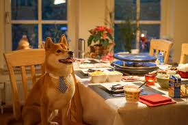Mom Lets Dog Sit At The Dinner Table And Then We Laugh