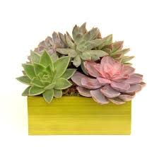 terrariums u0026 succulent plants same day nyc plant delivery by
