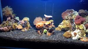 Saltwater Aquascaping Aquascape Eye Candy 11 Examples For Inspiration Marine Depot Blog