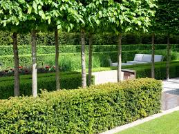 california native plant garden plants plant hedges photo plant hedges for privacy best hedges