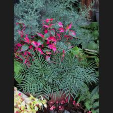 native wetland plants saul nurseries home