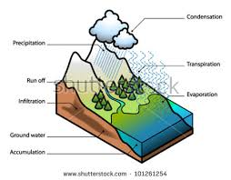 water cycle showing evaporation transpiration condensation stock