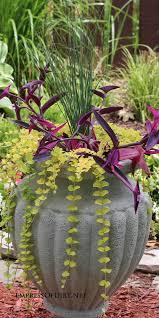 Flower Planter Ideas by 54 Best Flower Planter Idea U0027s Images On Pinterest Gardening