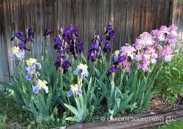 plants native to colorado growing bearded iris how to garden in colorado how to garden